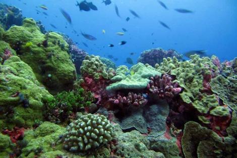 Zona Protegida de las Islas Fénix, en Kiribati. | El Mundo