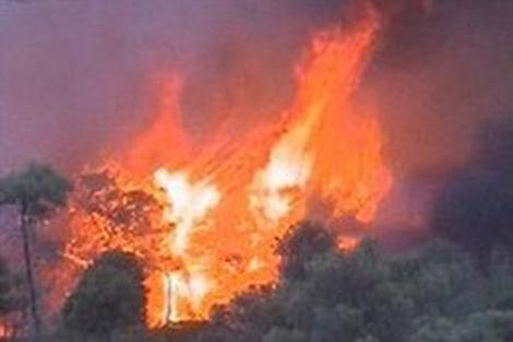 El incendio en el monte Carmelo, en los alrededores de Haifa. | Reuters