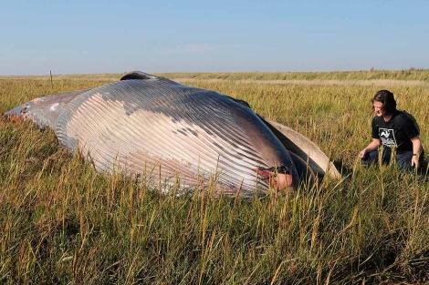 Una mujer observa el cadáver de la ballena hallada en East Yorkshite. | AP