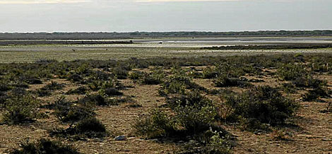 La laguna de Santa Olalla, seca. | Foto cedida por WWF