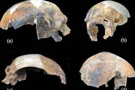 Cuatro posiciones del mismo cráneo, en el que se observa la fractura. | PNAS