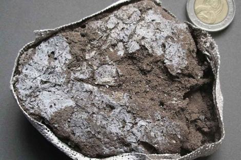 Fragmento del colchón vegetal fosilizado de la Media Edad de Piedra.   'Science'