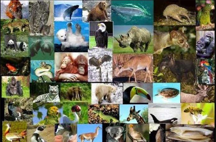 sexta extincion masiva de la tierra, esta tuani, animales extintos, animales en peligro de extincion,