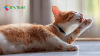 gatos, como se limpian los gatos, esta tuani,
