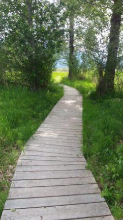 Wetland boardwalk.jpg.web