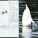 swan bottom sketch esteban peña art