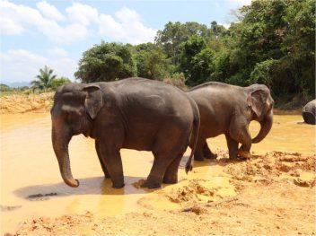 Krabi-sancturaire-elephant-2