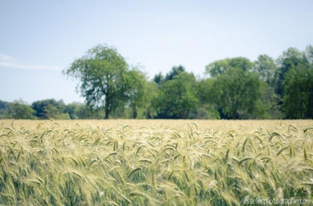 Balade champ de blé 220614 - Estelle R Photographie - Photographe Mariage et Lifestyle Haute saône, Vosges, Lorraine; Franche Comté-48