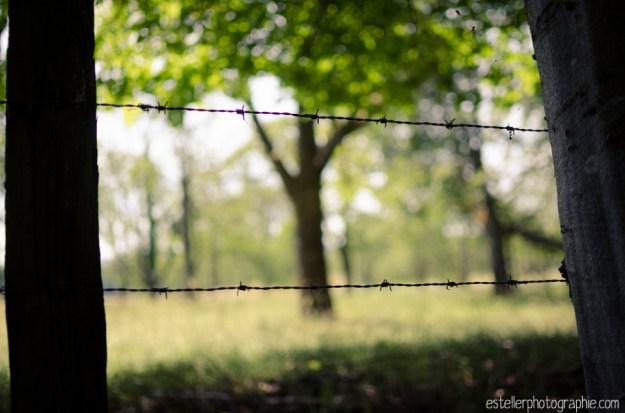 Balade champ de blé 220614 - Estelle R Photographie - Photographe Mariage et Lifestyle Haute saône, Vosges, Lorraine; Franche Comté-49