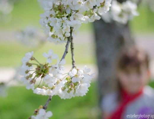 photo enfant cerisiers fougerolles haute saône