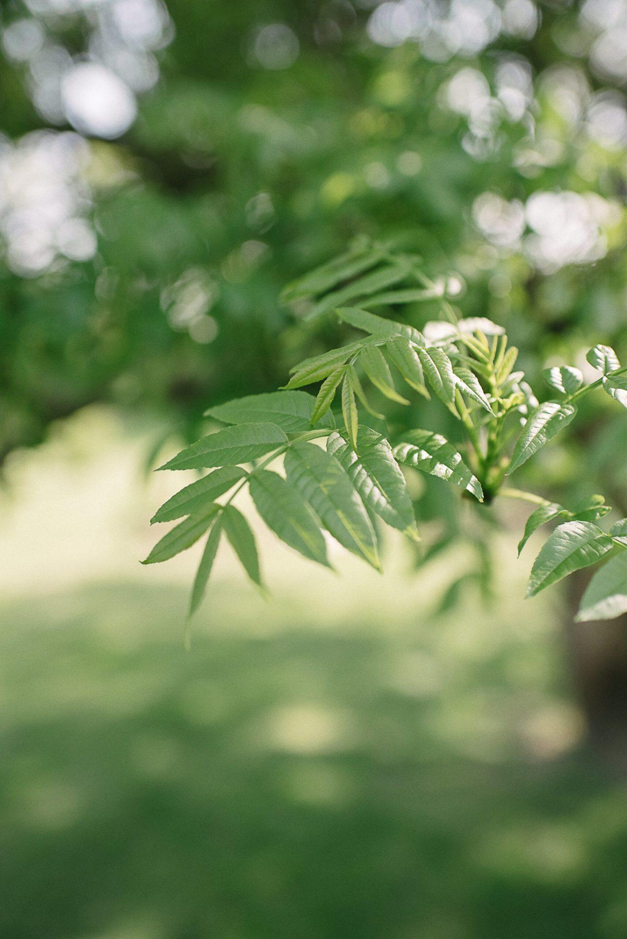 Petit détail de la végétation sur le lieu de réception du mariage