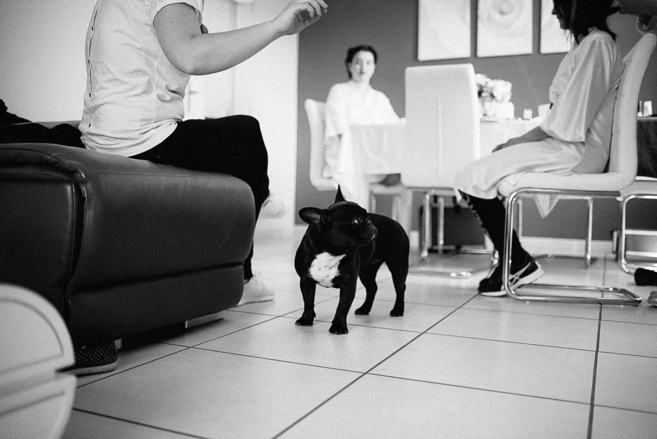Le chien de la famille est aussi là durant les préparatifs