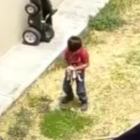 Captan a un niño maltratando a cachorrita rescatada (VIDEO)