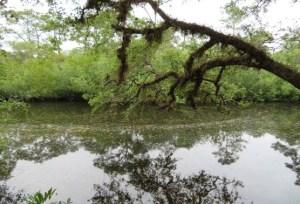 Estero on the River