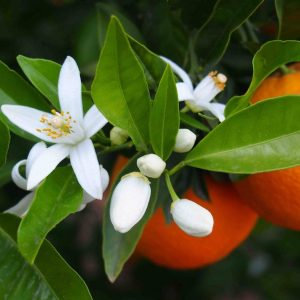 fiori arancio
