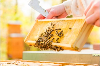 Bee Berlin: Urbanes Imkern