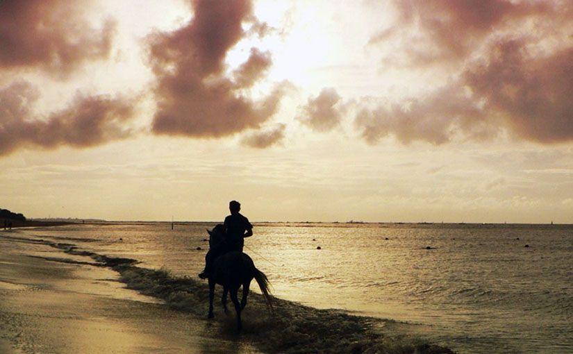 Empieza ZenTauro: mindfulness y caballos
