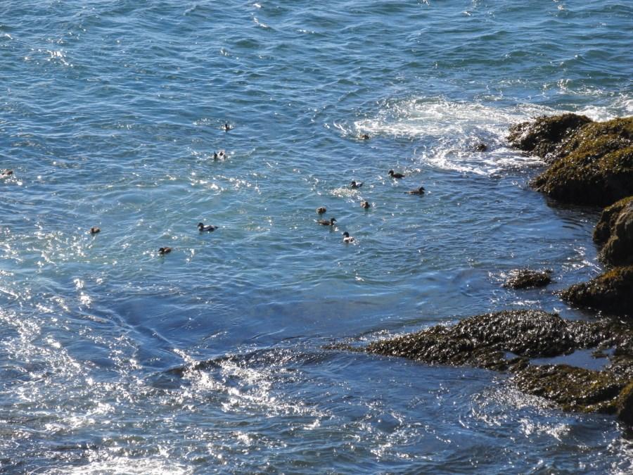 Sea birds swimming and fishing