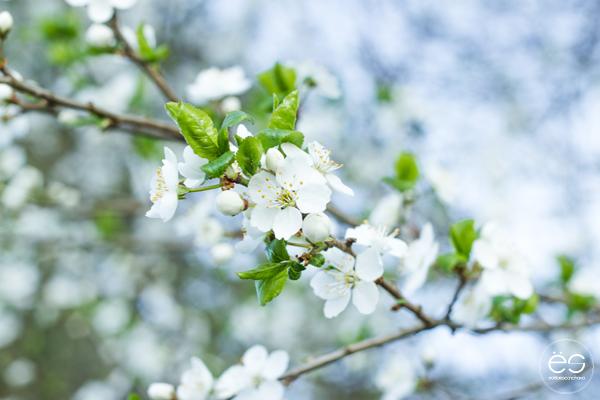 flores-estilo-escandinavo-04