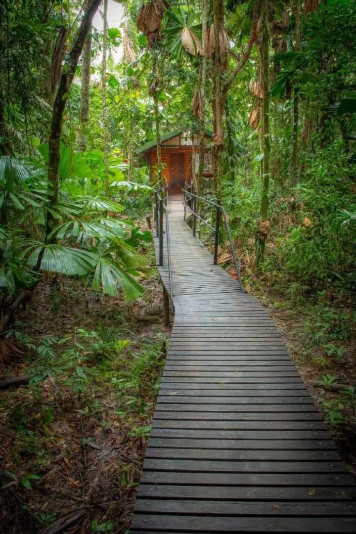 Wooden Boardwalk Daintree Rain Forest in Australia (2)