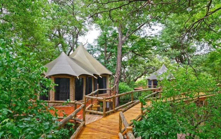 Wooden Walkway Nestled in Thick Green Forest Nambwa Tented Lodge in Bwabwata National Park Caprivi Zambezi