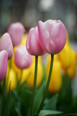 Bunga Paling Indah Sedunia : bunga, paling, indah, sedunia, Agustus, Estisyafaah21