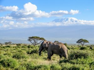Parks and Beaches-Amboseli National Park