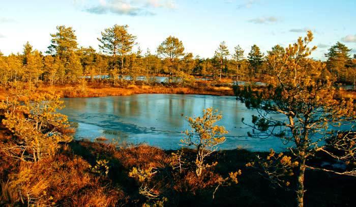 Pantanos-de-Viru-Raba-en-el-Parque-Nacional-de-Lahemaa