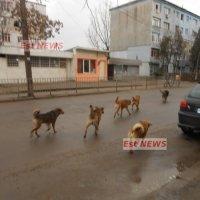 Câinii comunitari se înmulțesc, responsabilii cu eliminarea lor de pe străzi se ceartă