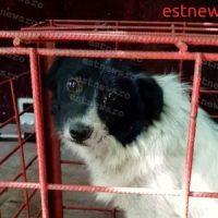 Apel la iubitorii de câini! 47 patrupede din padocul de la Bârlad vor fi eutanasiate peste o săptămână, dacă nu vor fi adoptate