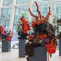 Ciencia y arte en los arrecifes de coral de Crochet