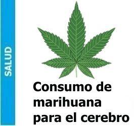 El consumo de marihuana reduce la dopamina en el cerebro, El consumo de marihuana reduce la dopamina en el cerebro