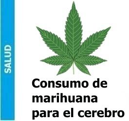 consumo_de_marihuana_reduce_la_dopamina_en_el_cerebro_portada-e1479237025447