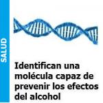 Molécula que protege al cerebro de los efectos del alcohol, Molécula que protege al cerebro de los efectos del alcohol