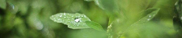 cropped-after-rain-sara-augusto-41.jpg