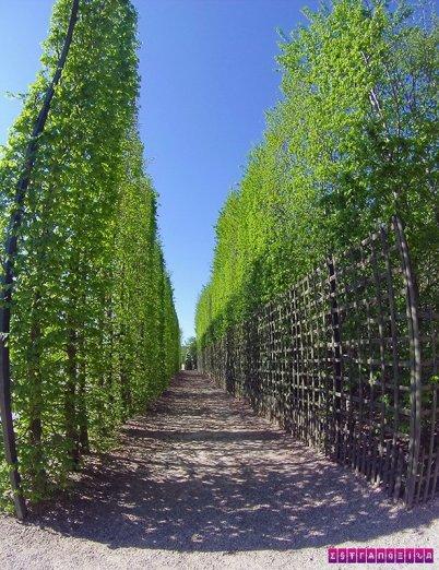 jardins-palacio-versalhes-frança-jardim-vertical