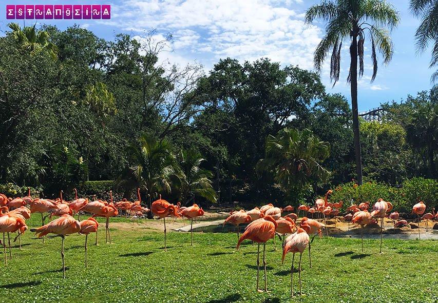 busch-gardens-tampa-flamingos