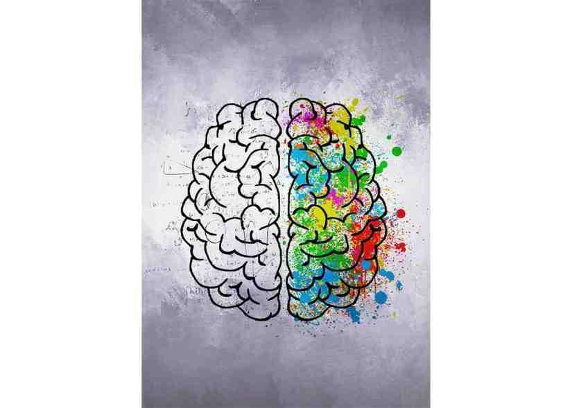 Estilos de aprendizaje basado en los hemisferios cerebrales
