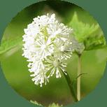Эстрофемин препарат для устранения неприятных симптомов климакса