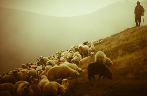 Resultado de imagem para pastorear