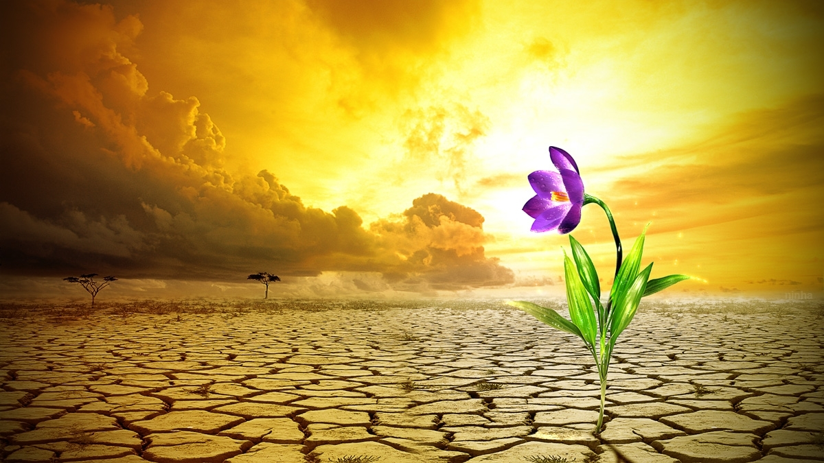Resultado de imagem para Deserto: lugar de crescimento e aprendizagem…