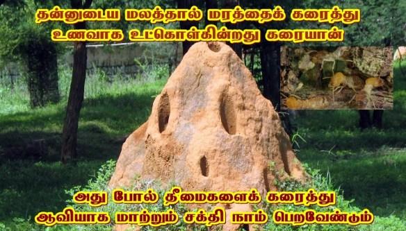 Karaiyan _ Termites