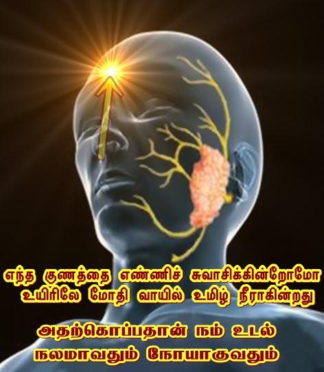 Salaivary glands