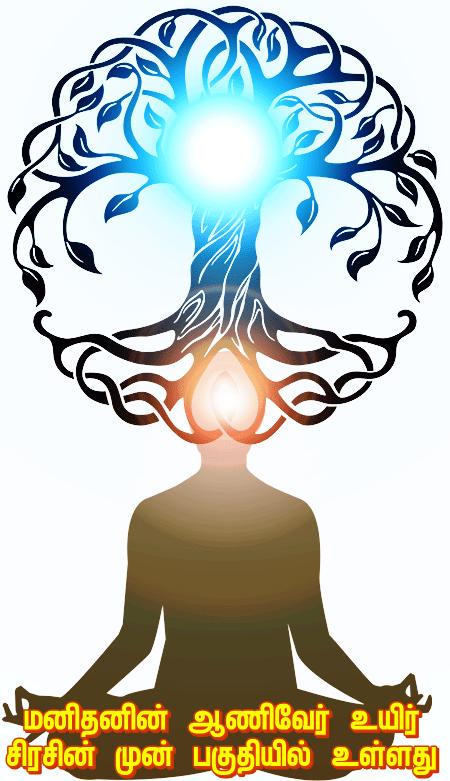 Taproot meditation