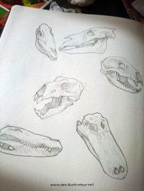 D'abord il a fallu que je travaille un peu sur des crânes parce-que le personnage en question n'a pas de tête mais un crâne d'animale.