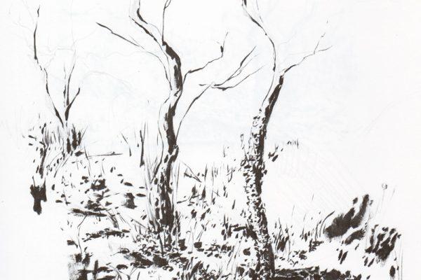 Winter on the Fordham cliffs