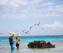 Tikehau Pearl Beach Resort - Book With -tahiti Travel