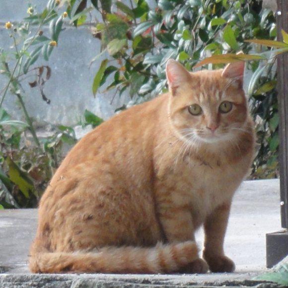 江田島ネコ