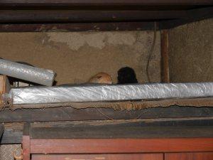 天井裏風ロフトに子猫
