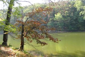 Brown County State Park, Indiana